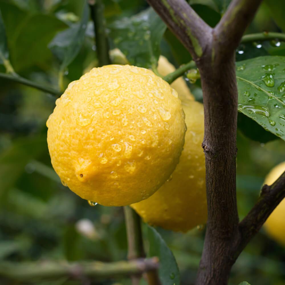 Zitronenöl-Naroma.ch